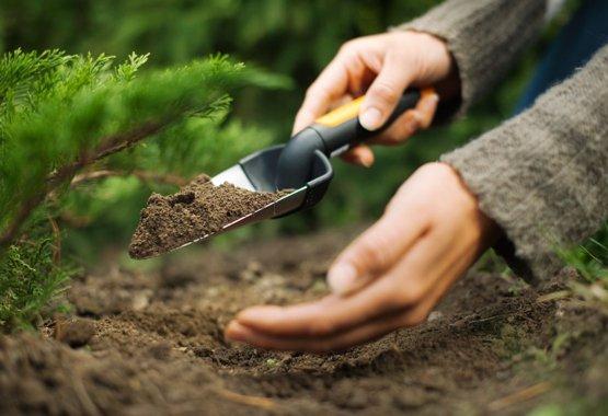 תנו לצמחים החדשים שלכם התחלה טובה